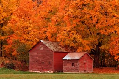 Barns-and-Foliage