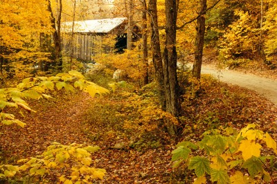 Bridge-Through-The-Wood