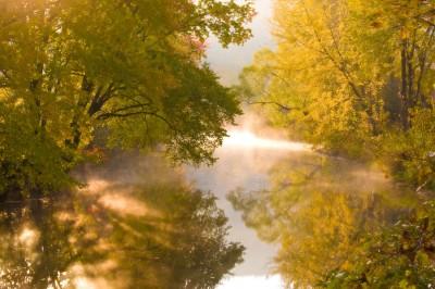 Creekside-Foliage