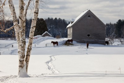 Horse-Path