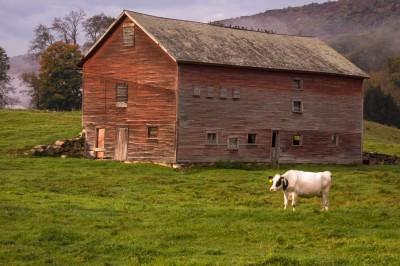 Wallingford-Cow