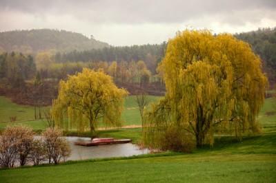 Rainy-Day-Willows
